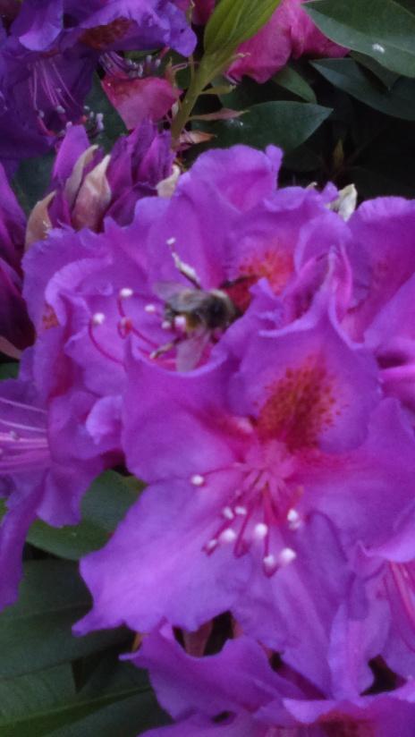 20150523purpleflower2